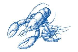 Crevettes et crustacés